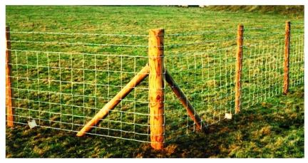 Fencing type Pic